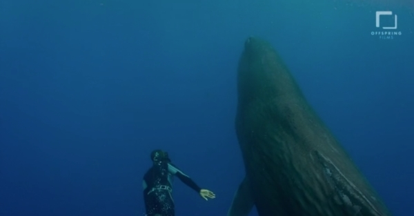 go freedving - freediving with sperm whales - patrick ayree 5