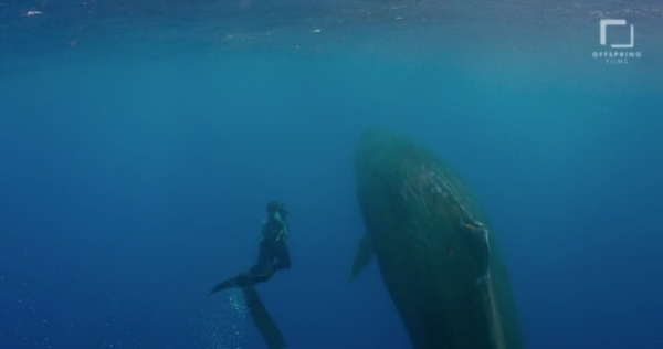 go freedving - freediving with sperm whales - patrick ayree 6