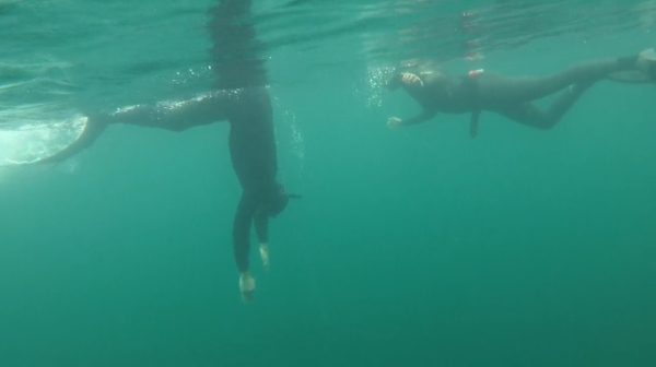 Go Freediving - What do you learn on a freediving course - Duck dive