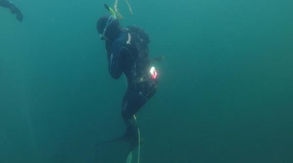 freediver course4