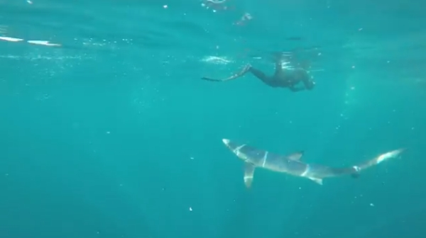 freediving with Sharks - sharks4