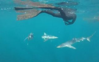 freediving with sharks - sharks7