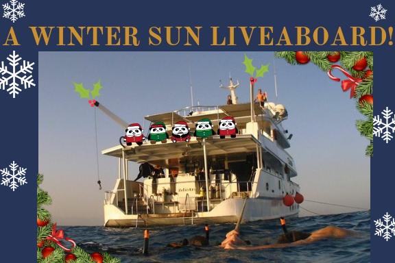 best freediving gift liveaboard