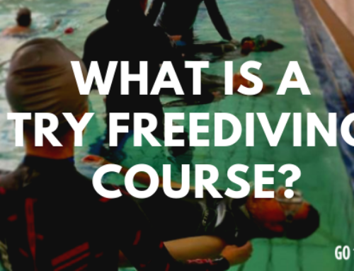 What is a Try Freediving Course?