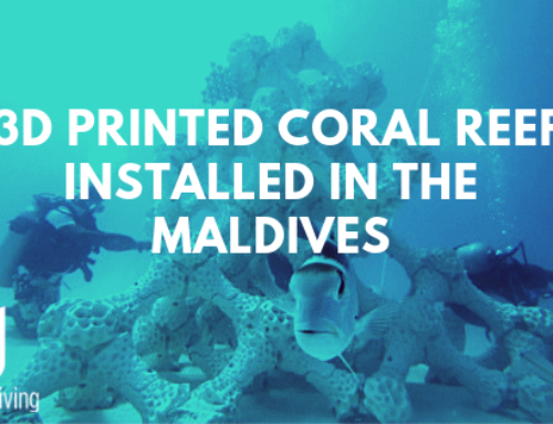 3D Printing of Coral Reef is Helping Our Coral Nurseries