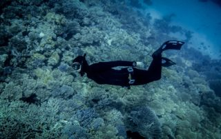 Red Sea Freediving Holiday - freediving3