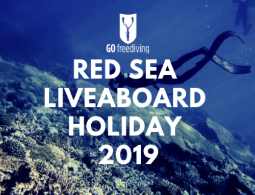 Red Sea Freediving Holiday 2019