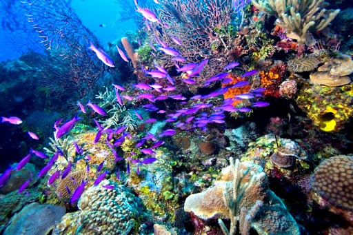 dive envy - locations The Belize Barrier Reef