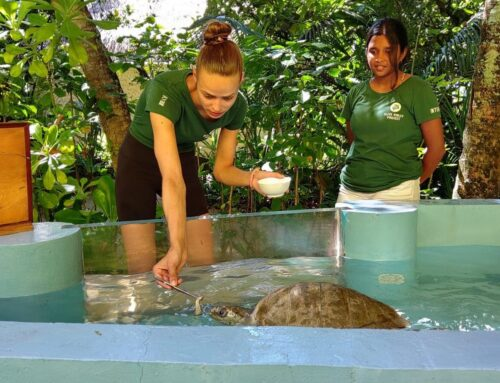 Day 8: Volunteering at Turtle Rescue Sanctuary – The Olive Ridley Project