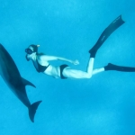 Emma Farrell freediving with wild spotted dolphins