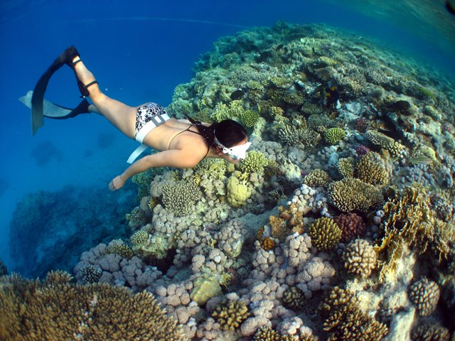 Freediving in bikini on coral reef in Red Sea Egypt