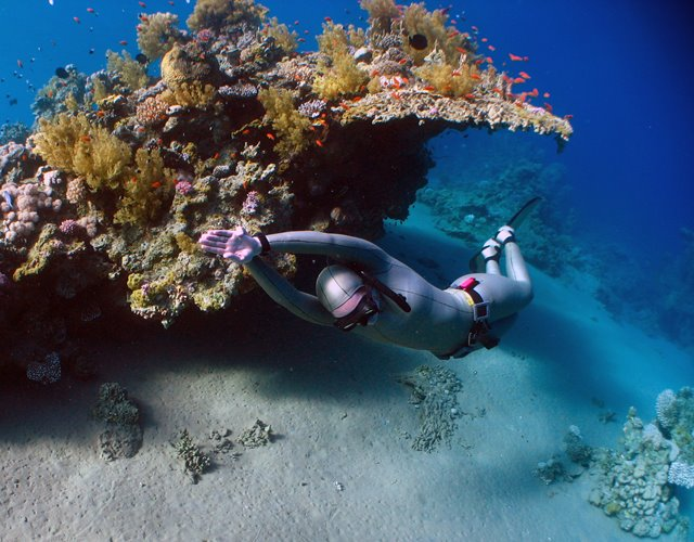 Emma Farrell freediving on a coral reef in the red sea with monofin and silver suit